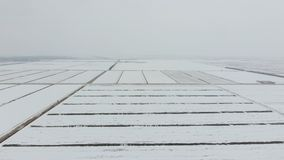 Top view of a plowed field in winter. A field of wheat in the snow.  Royalty Free Stock Image