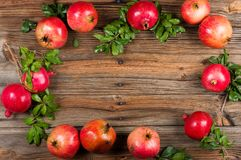 Branches of a pomegranate tree with fruits. Royalty Free Stock Images