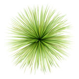 Top view of potted palm tree isolated on white Royalty Free Stock Images
