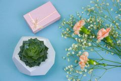 potted succulent, gift box and bouquet of flowers on a blue background royalty free stock photo