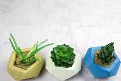 Potted succulents on white snone background copy space. Top view potted succulents on white snone background copy space stock image