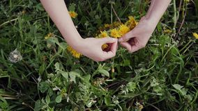 Top view of process of weaving dandelion wreath. Woman hands making a yellow wreath from fresh wildflowers. Close up. 4k stock footage