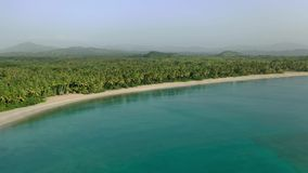 Landscape palms island. Caribbean sea palm trees forest. White sand beach background stock footage
