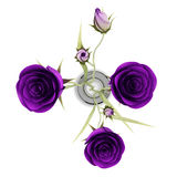 Top view of purple eustoma flowers in glass vase isolated on white Stock Image