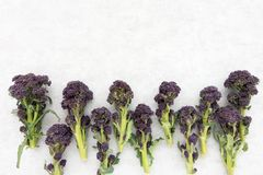Top View of Purple Sprouting Broccoli. With copy space Royalty Free Stock Photography