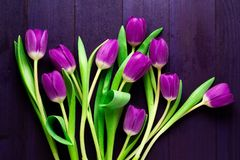 Top View of Purple Tulips on Wooden Purple Background. Ultra violet colored tulips with green leaves on deep purple wooden surface Royalty Free Stock Photos