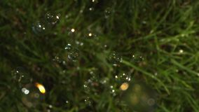 Top View of Rain Drops Falling on the Grass in Slow Motion shot on Phantom and  Laowa stock video
