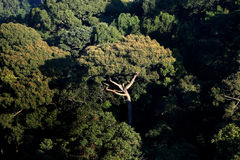 Top view of Rainforest mountain in Chiang Mai, Thailand Stock Photography