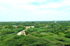 Top view rameswaram forest royalty free stock images