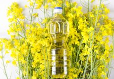 Top view of rapeseeds oil in the plastic bottle.Bootle of canola oil on the blooming canola flowers stock photos