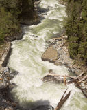 Top view of rapid mountain river.Dombay.The North Caucasus. Russia Royalty Free Stock Photography