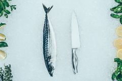 Top view of raw mackerel fish, knife and fresh ingredients. On ice Stock Image