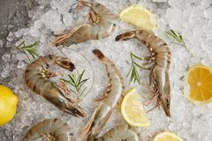 Top view of raw prawns with rosemary and lemon slices on crushed ice Stock Photography