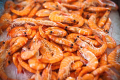 Top view of raw whole tiger prawns on ice Stock Photos