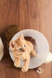 Top view of red kitten sitting in clear bucket. With clews of thread on wooden table background Stock Photos