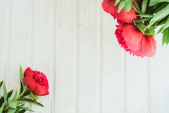 Top view red peony on white wooden background with copyspace Stock Photo