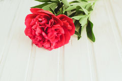 Top view red peony on white wooden background with copyspace Stock Photos