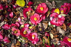Top View Red and Pink Flowers and Leaves. On Ground royalty free stock photos