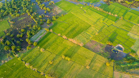 Top view of rice field in Myanmar Royalty Free Stock Photo