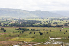 Top view of Rice fields and mountains Stock Photography