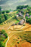 Top view of rice terraces and roofs of village houses. Vietnam. Top view of rice terraces and roofs of village houses among green trees at highlands of Sapa Royalty Free Stock Image