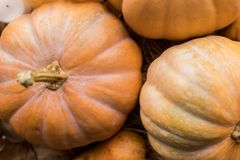 Ripe pumpkins on table. Top view of ripe fresh organic pumpkins on rustic table Stock Photography