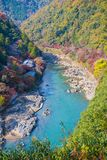 Top view of the river and forest in autumn season at Arashiyama. Kyoto, Japan Royalty Free Stock Photography