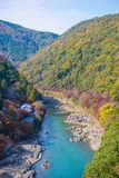 Top view of the river and forest in autumn season at Arashiyama. Kyoto, Japan Royalty Free Stock Image