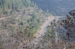 The top view on the road laid through a large forest Royalty Free Stock Images