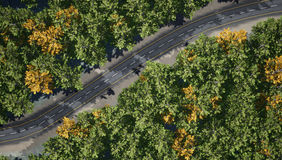 Top view of the road through a thick deciduous forest. Royalty Free Stock Photo