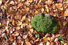 Top view of rock with moss on leaf of leaves Stock Photo