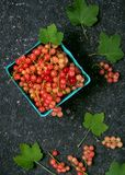 Top view of rosa and white currants in a cardboard box on a dark rustic background. royalty free stock images