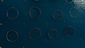 Top view at the round ponds encircled with net of fish farm in Adriatic sea. Montenegro Royalty Free Stock Photo