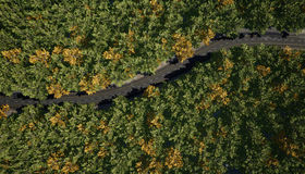 Top view of a rural road through the forest. Stock Photography
