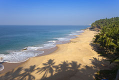 The top view on a sandy beach of the sea and a palm tree. India Stock Photos
