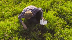 Scientist ecologist examining plants on the meadow