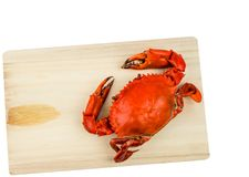 Top view of Scylla serrata. One steamed crab on wood cutting board on white background with copy space. Seafood restaurants concept royalty free stock photos