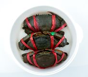 Top view of Scylla serrata. Three fresh crabs are tied with red plastic ropes and arranged in a neat rows in steaming container. Raw materials for seafood royalty free stock images