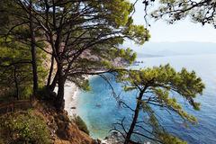 Top view on sea beach through pine-trees at sun day Stock Image