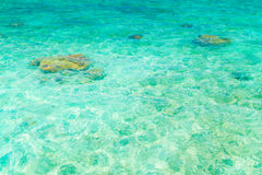 Top view of the sea with the coral reefs at Maldives island . Royalty Free Stock Images