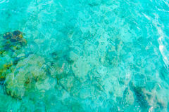 Top view of the sea with the coral reefs at Maldives island . Stock Images