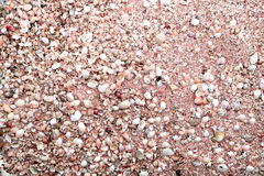 Top view of sea shells background Royalty Free Stock Photos