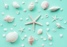Top view of seashell set on color background. royalty free stock photography