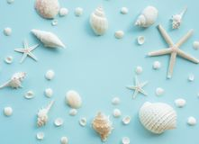 Top view of seashell set with copy space on color background. Summer, holiday,travel concept ideas stock photo