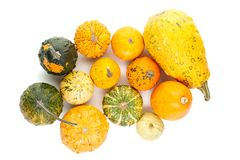 Top viev on set of small pumpkins isolated on white background Royalty Free Stock Images