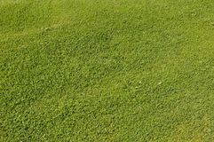 Greenery grass background. Top of view on shaved and greenery grass Royalty Free Stock Photo