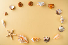 Top view of shells on yellow table. Travel vacation concept. Dreaming about vacation on a tropical beach. Concept decoration tropi Royalty Free Stock Photography