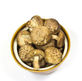 Top view shiitake mushroom Stock Photography