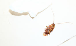 Top view shot of a dead cockroach on floor toilet with tissue paper. As background or print card Royalty Free Stock Images