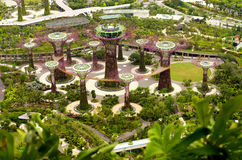 Top View shot of Gardens by the Bay, Singapore. Bird's Eye View shot of the Supertrees at the Gardens by the Bay royalty free stock image